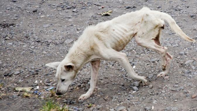 Kejam, kasus penyiksaan hewan oleh manusia