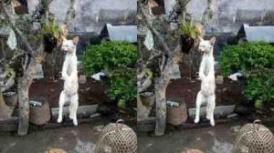 Penyiksaan kucing dengan cara menggantung hingga mati di Bali